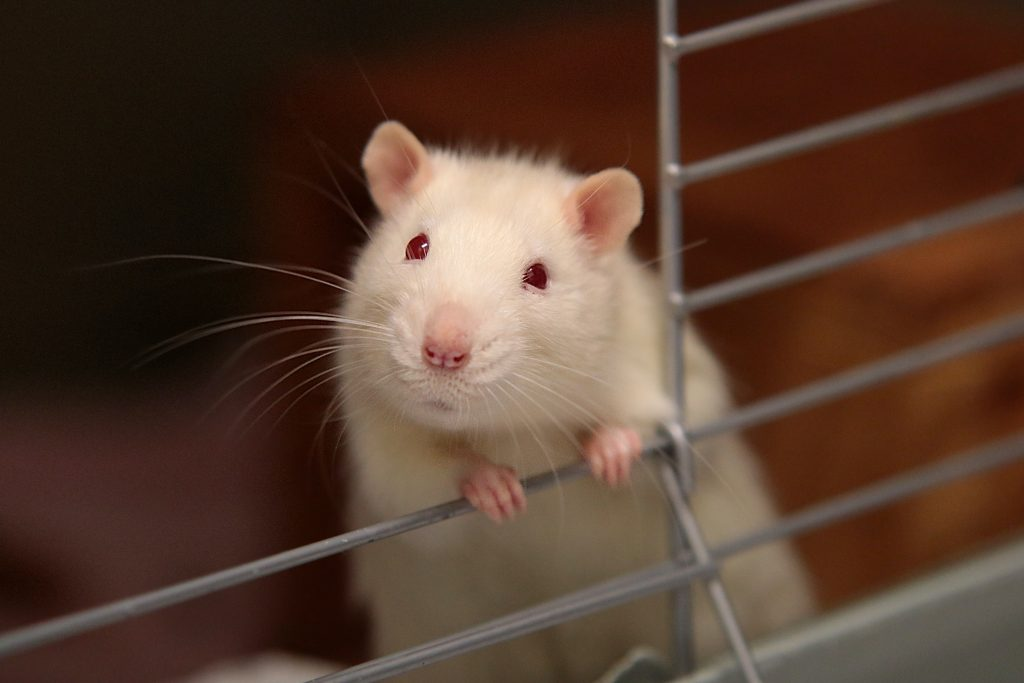 Animal Testing - Cruel and Kind Facts About Cruelty-Free Beauty Products - Content Spa