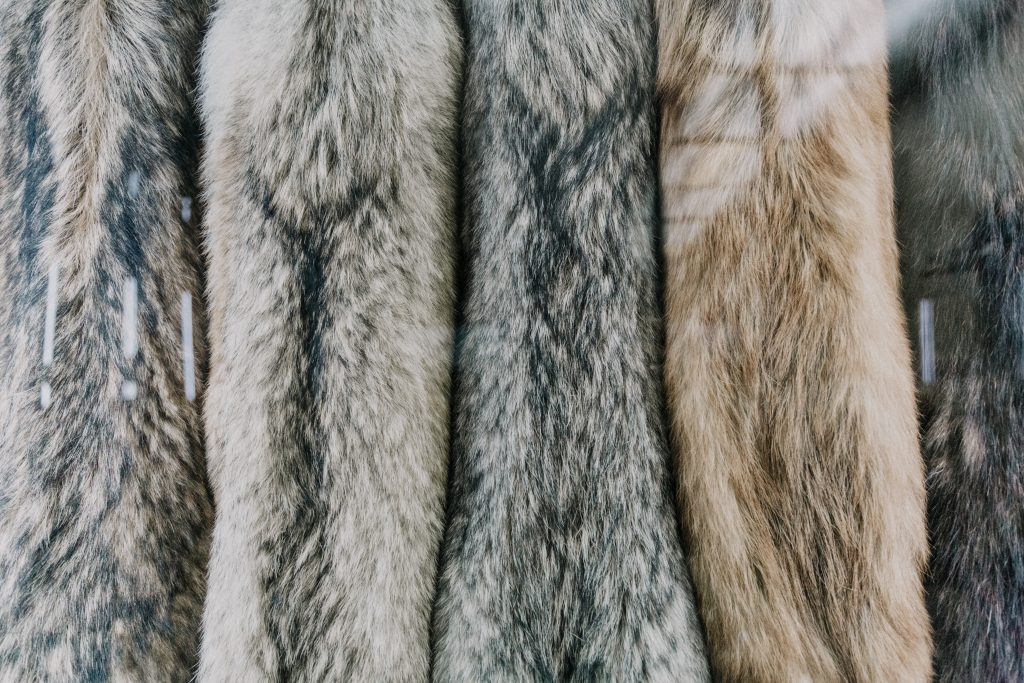 Fur Variations - Denim Without Dilemma - The Rise of a Sustainable and Ethical Denim Jeans Industry - Content Spa